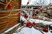 Jim Wilcox - Frozen Red