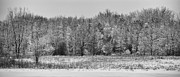 Winter Landscapes Metal Prints - Frozen Metal Print by Sebastian Musial