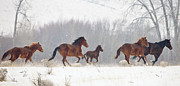 Wild Horses Photo Posters - Frozen Track Poster by Mike  Dawson