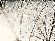 Frozen Branches Posters - Frozen tree branches in winter Poster by Oleksiy Maksymenko