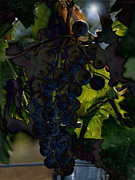 Concord Grapes Prints - Fruit of the Vine Print by Sharon Elliott