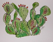 Desert Drawings Prints - Fruity Prickly Pear Print by Marcia Weller-Wenbert
