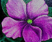 Painted Details Posters - Fuchsia African Violet in Stained Glass Poster by Barbara Griffin