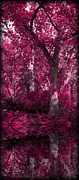 Sheena Pike - Fuchsia Forest