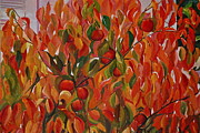Persimmon Paintings - Fuju Persimmon Tree by Amy Fearn