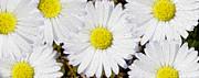 Full Bloom Print by Jon Neidert