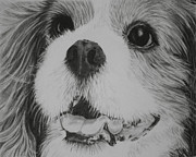 Mills Drawings - Full Face Cavalier King Charles Spaniel by Terri Mills