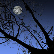 Alone Digital Art Posters - Full Moon And Black Winter Tree Poster by Ben and Raisa Gertsberg