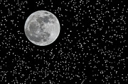Full Moon Digital Art Originals - Full Moon and Stars by Frank Feliciano