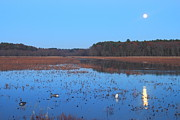 Concord Posters - Full Moon at Great Meadows National Wildlife Refuge Poster by John Burk