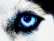 Big Eye Dog Posters - Full Moon Reflection Poster by Anastasiya Malakhova