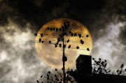 Roost Prints - Full Moon Roost Print by Bill Cannon