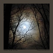Patricia Overmoyer - Full Moon Through the...