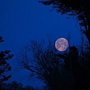 Byron Varvarigos - Full Moon with Trees