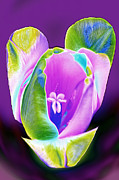 Green Pyrography Posters - Funky Pop Open Tulip Poster by Linda Phelps