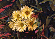 Linda Phelps - Funky Yellow Daisies