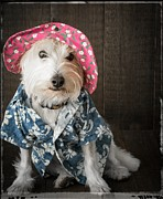 Dressed Photo Framed Prints - Funny Doggie Framed Print by Edward Fielding