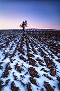 Lone Tree Posters - Furows in the snow Poster by John Farnan