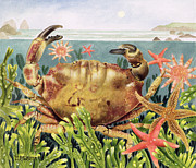 Blue Crab Paintings - Furrowed Crab with Starfish Underwater by EB Watts