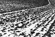 Ploughed Prints - Furrowed Print by John Farnan
