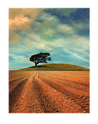 Oak Tree Metal Prints - Furrows Metal Print by Mal Bray