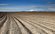 Oregon Art - Furrows by Mike  Dawson