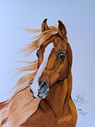 Horse Drawing Prints - Fury - HHH Horse Rescue Series 2 Print by Cheryl Poland