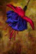 Digitally Enhanced Posters - Fuschia Flower Poster by Susan Candelario