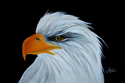 Bald Eagle Painting Framed Prints - Gabriel Framed Print by Adele Moscaritolo