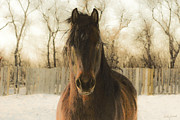 Friesian Art Framed Prints - Gabriel in Winter Framed Print by Judy Wood