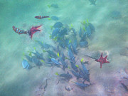 Digital Pastel Paintings - Galapagos Islands from Under Water by Angela A Stanton