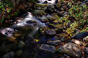 Scott McGuire - Galena Creek Fall...