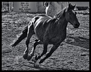 Cave Creek Cowboy Prints - Gallop 2 Print by Tommy Anderson