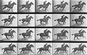 White Horse Photographs Posters Posters - Galloping Horse Poster by Eadweard Muybridge