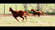 Arie Arik Chen - Galloping horses