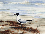 Beach Bird Paintings - Galveston Gull by Sam Sidders