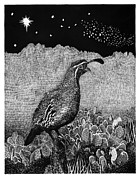 Pen  Drawings - Gamblels Quail Lucy in the sky by Jack Pumphrey