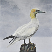 Sea Birds Paintings - Gannet on Sea Groyne by Lesly Holliday