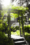 Sunlight Art - Garden arbor in sunlight by Elena Elisseeva