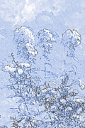 Abstracted Drawings - Garden Blue by Diana  Tyson