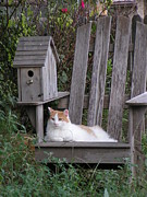 Chair Pastels Metal Prints - Garden Cat Metal Print by Tracy L Teeter