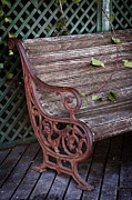 Iron  Prints - Garden Chair Print by Carlos Caetano