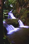 Robert Bissett - Garden Falls