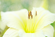 Daylily Photos - Garden Flirt by Reflective Moments  Photography and Digital Art Images