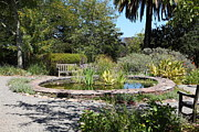 Benches Prints - Garden Fountain At Historic Jack London Cottage in Glen Ellen California 5D24545 Print by Wingsdomain Art and Photography