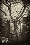 Garden Gate Prints - Garden Gate Print by Paul W Faust -  Impressions of Light