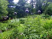 Lois Lepisto - Garden Globes