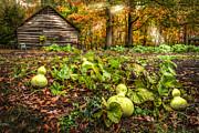 Debra and Dave Vanderlaan - Garden Gourds