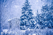 Debra Vronch Prints - Garden in Snow Print by Debra Vronch