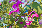 Sunbird Prints - Garden Jewels Print by Ashley Vincent